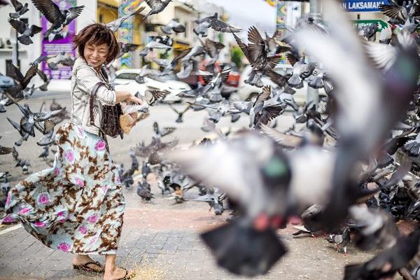 Beautiful Pigeon Photos  (19)