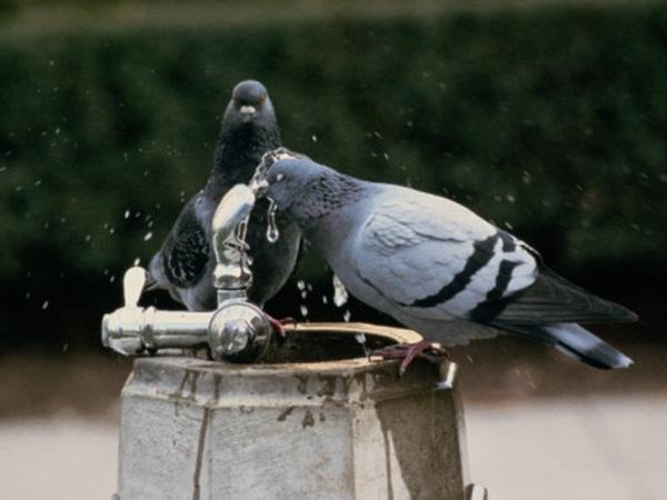 Beautiful Pigeon Photos  (32)