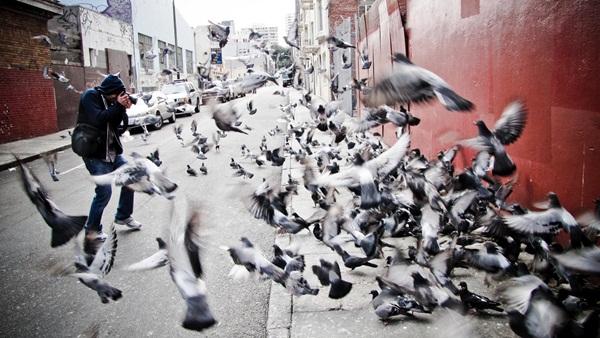 Beautiful Pigeon Photos  (41)
