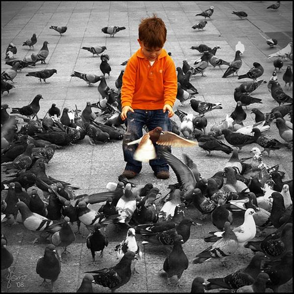 Beautiful Pigeon Photos  (6)