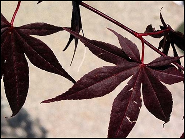 Examples Of Leaf Painting (6)