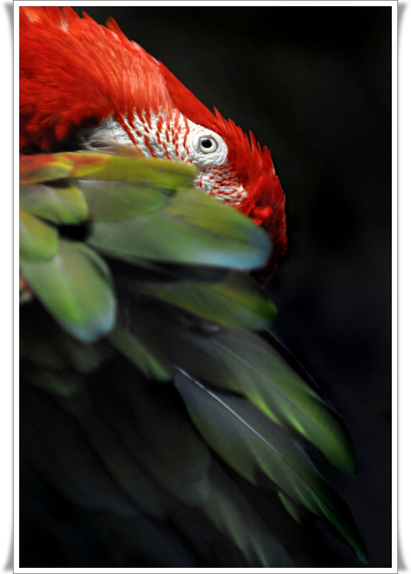 Pictures of Parrots (1)