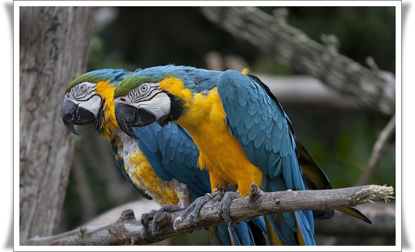 Pictures of Parrots (10)