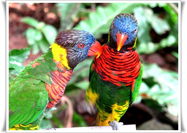 Pictures of Parrots (11)
