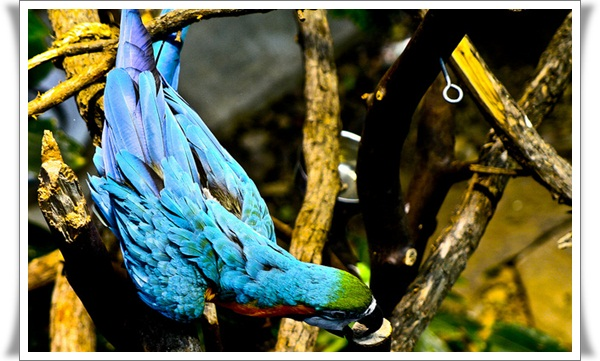 Pictures of Parrots (12)