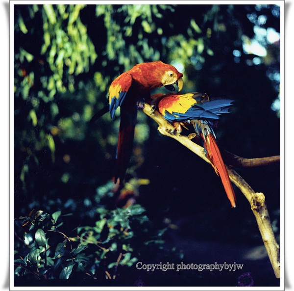 Pictures of Parrots (13)