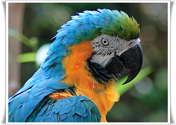 Pictures of Parrots (14)
