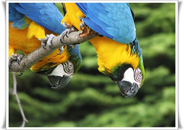 Pictures of Parrots (16)