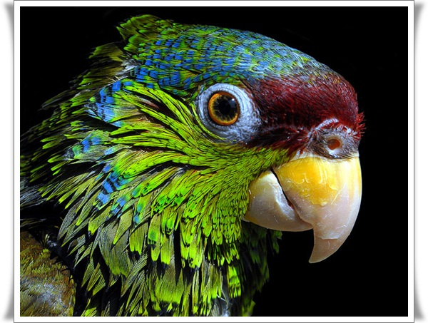 Pictures of Parrots (17)