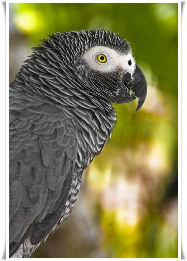 Pictures of Parrots (18)