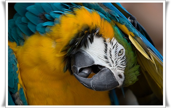 Pictures of Parrots (19)