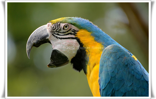 Pictures of Parrots (2)