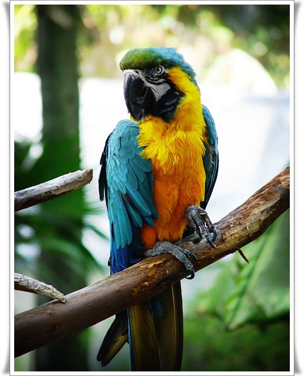 Pictures of Parrots (20)