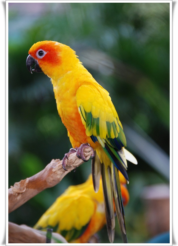 Pictures of Parrots (22)