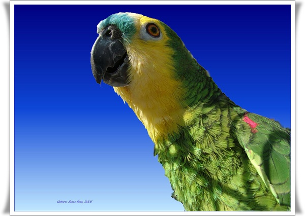 Pictures of Parrots (25)