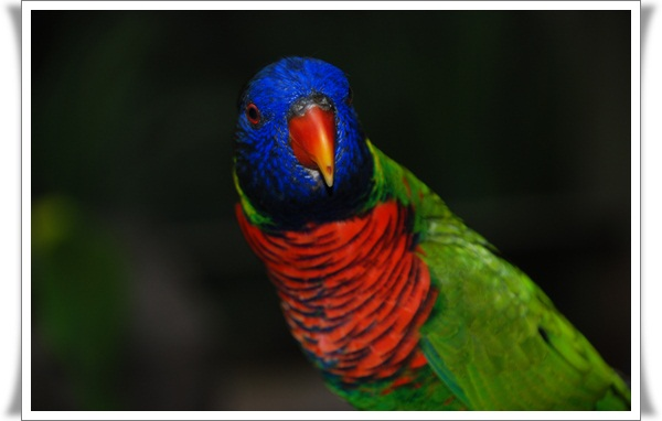 Pictures of Parrots (3)