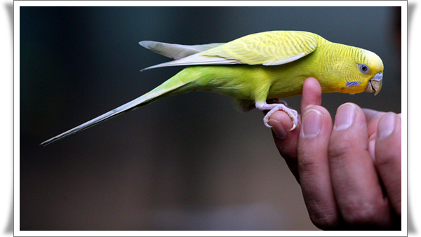 Pictures of Parrots (4)