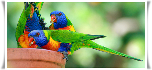 Pictures of Parrots (5)