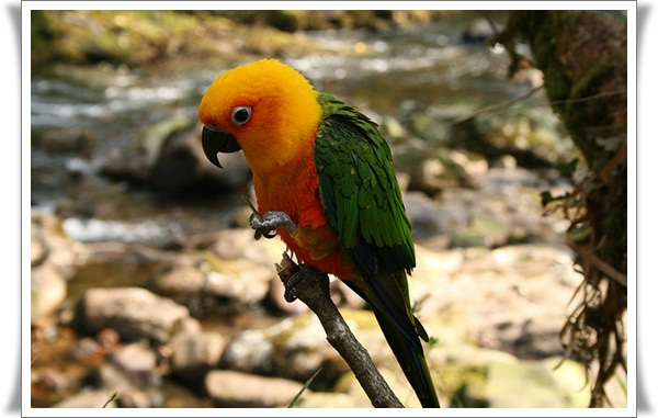 Pictures of Parrots (6)