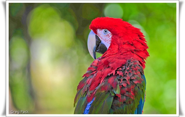 Pictures of Parrots (8)