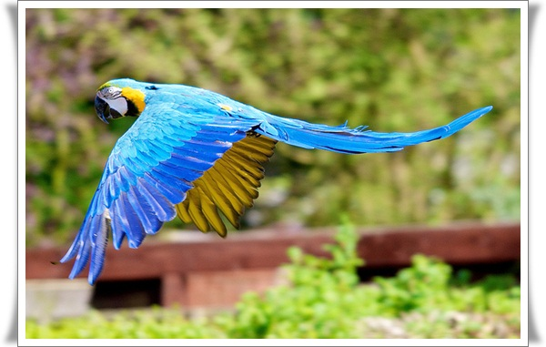Pictures of Parrots (9)