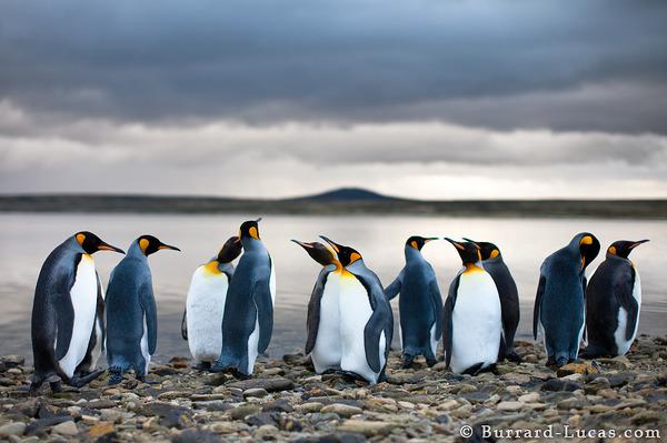 penguinimages.com