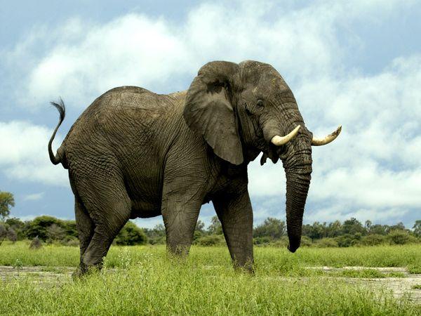 animals.nationalgeographic.com