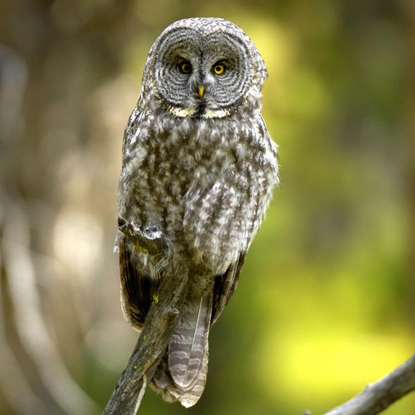 www.eagle-eye.com -