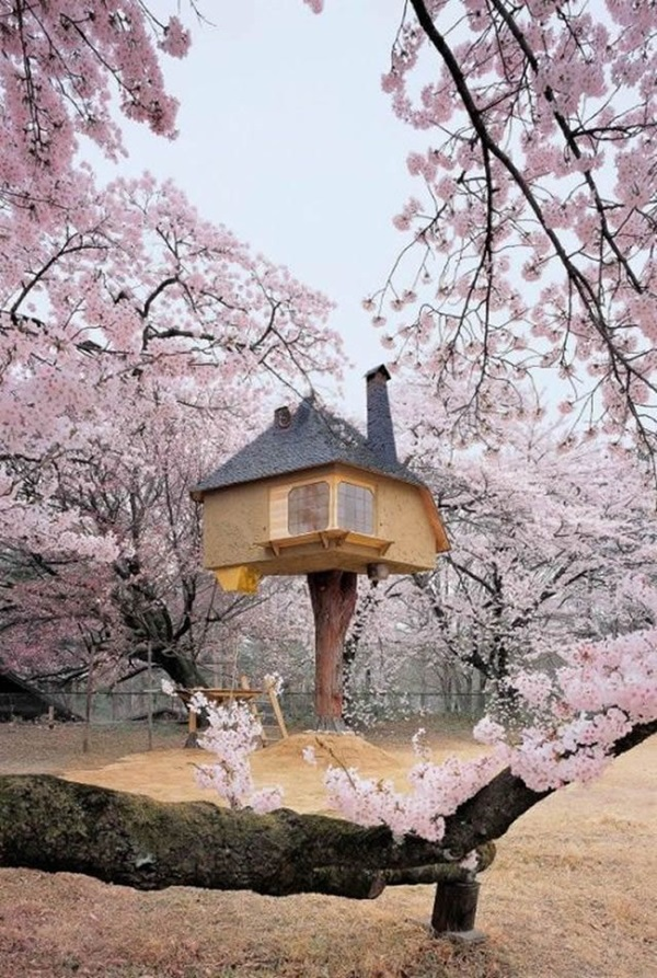 Beautiful Tree House Ideas (1)