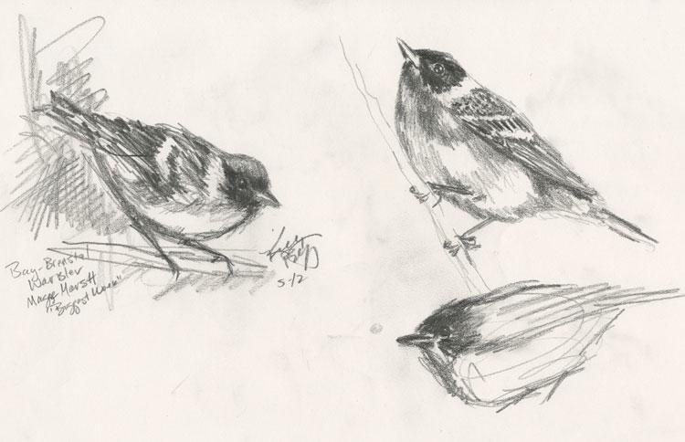 www.birdingisfun.com