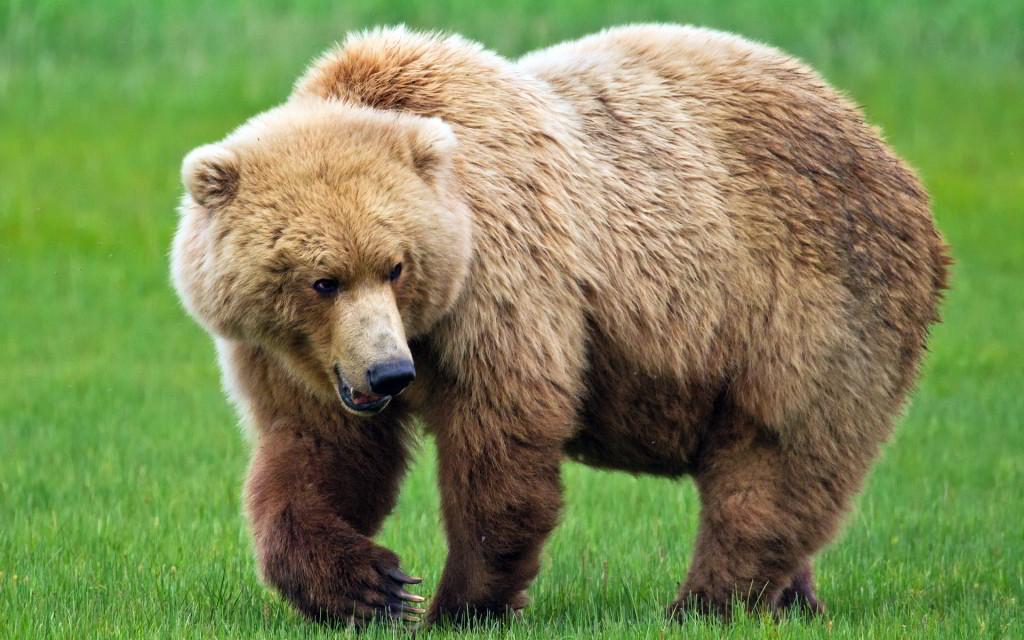 attitude status bear