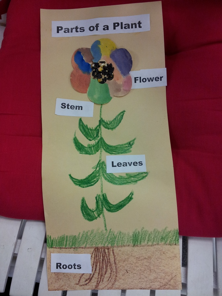 pre school science activities 13