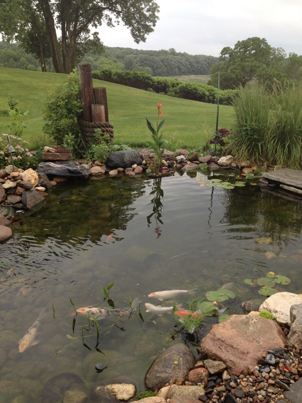 Elegant Backward Pond design (23)