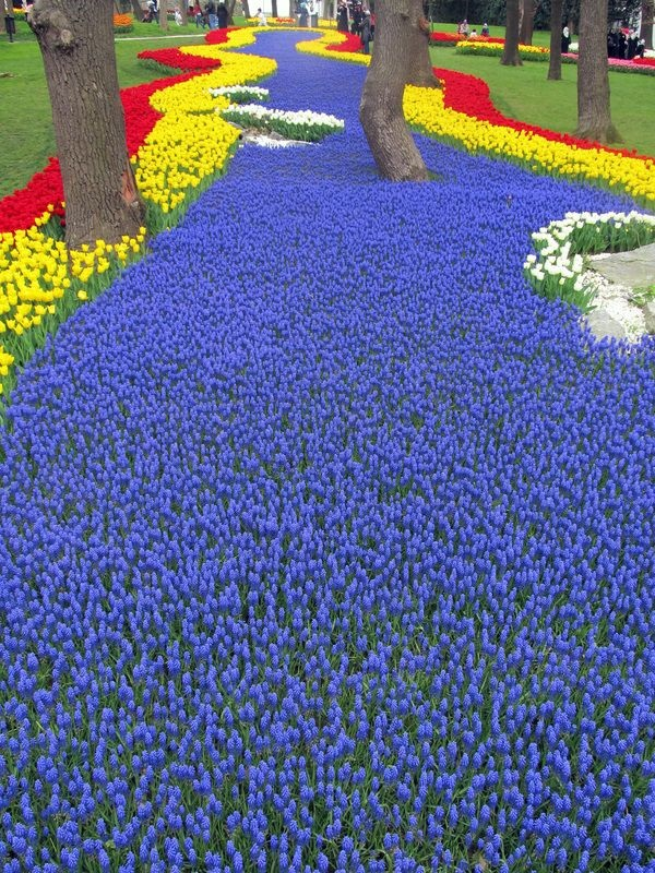 Fascinating Tulip field Pictures Never to be Missed (15)