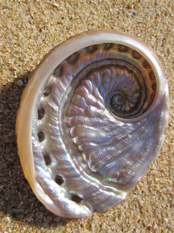 Shell, A Gift From the Sea (14)