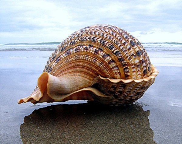 Shell, A Gift From the Sea (25)