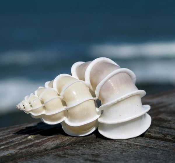 Shell, A Gift From the Sea (40)