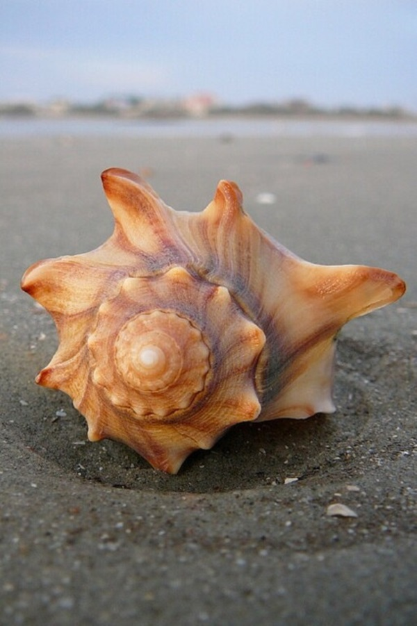 Shell, A Gift From the Sea (48)
