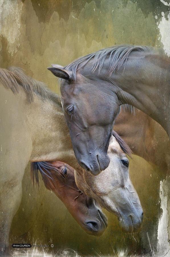 equine art 14