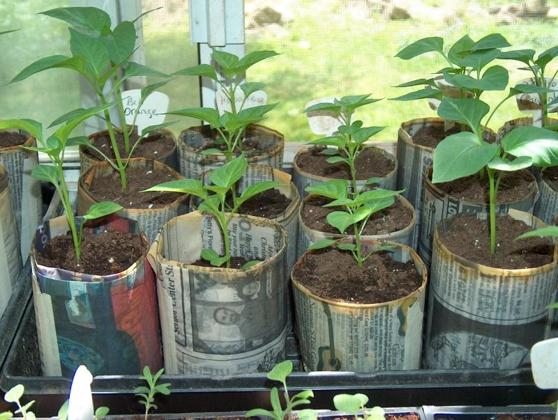 newspaper craft ideas seedling pots