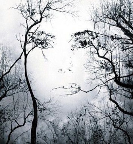 optical illusion face in the trees