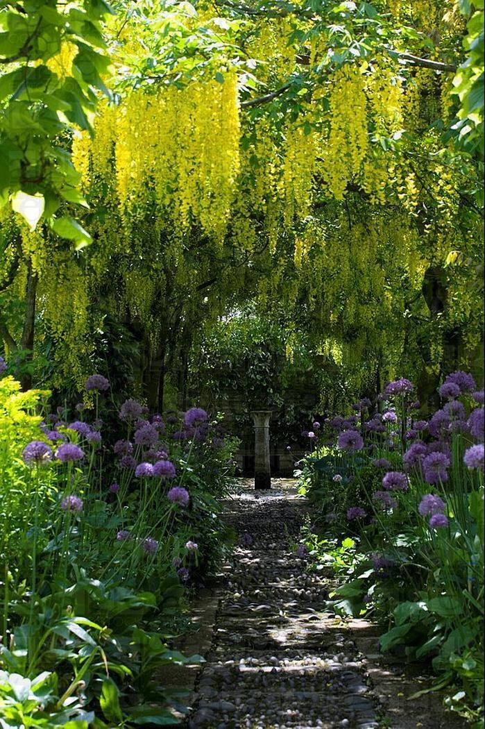 house garden 21