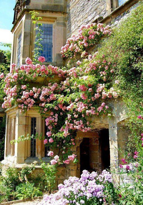 house garden 27