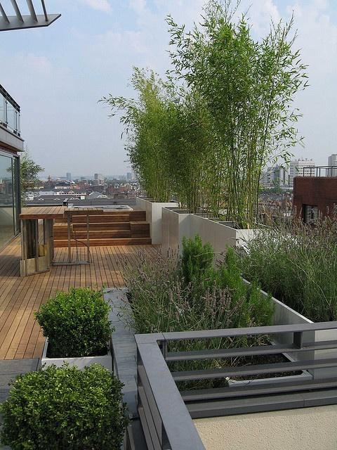 roof top garden 19