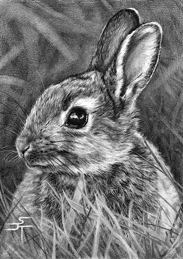 Realistic Animal Pencil Drawings (13)