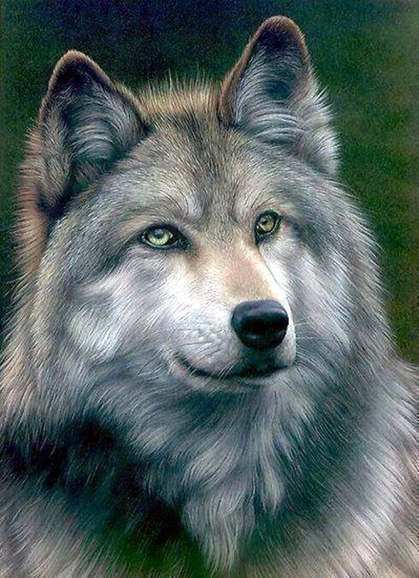 Realistic Animal Pencil Drawings (14)