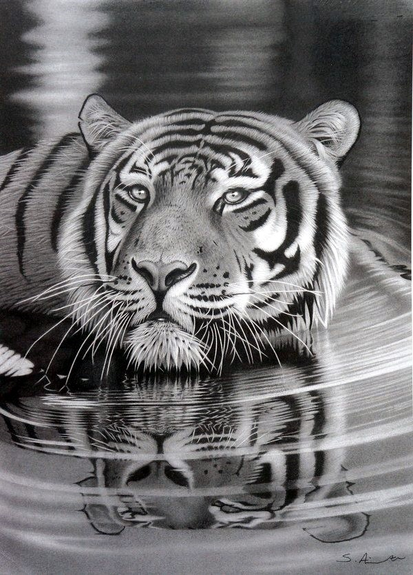 Realistic Animal Pencil Drawings (17)