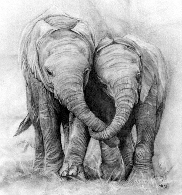 Realistic Animal Pencil Drawings (20)