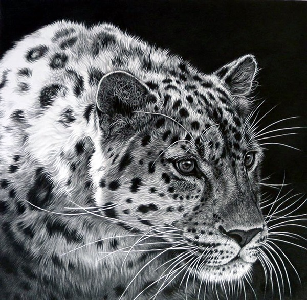 Realistic Animal Pencil Drawings (22)