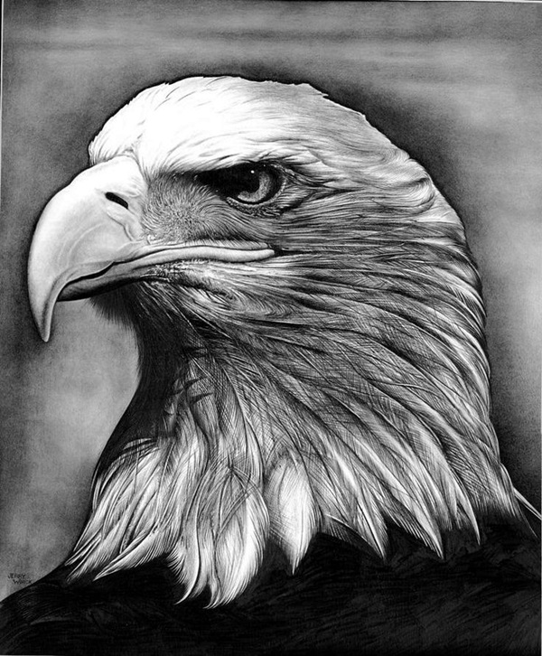 Realistic Animal Pencil Drawings (23)